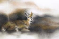 White-tailed Deer – Cerf de Virginie
