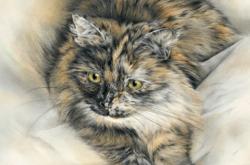 Mocha - cat - chat