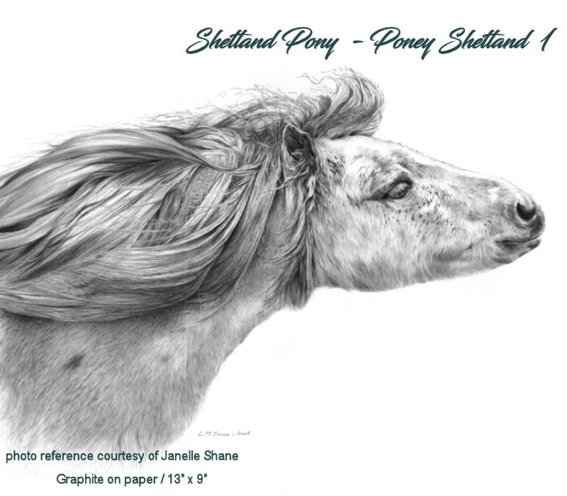 Shetland Pony 1 - Poney Shetland 1