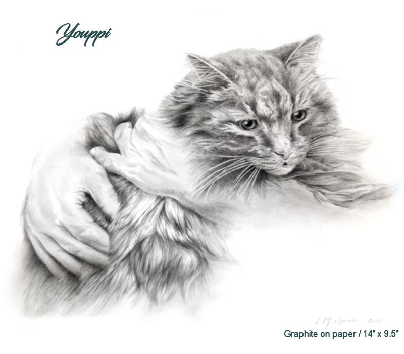 Youppi - cat - chat