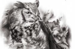 Great Horned Owl - Grand-duc d'Amérique