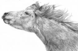 Shetland Pony 2 - Poney Shetland 2