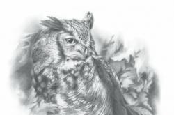 Great Horned Owl - Grand Duc d'Amérique