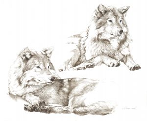 Wolves by Canadian wildlife artist Laurene Spino