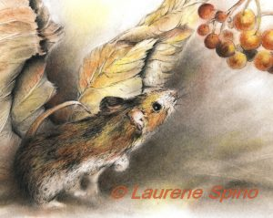 LSpino_Deer Mouse_close-up
