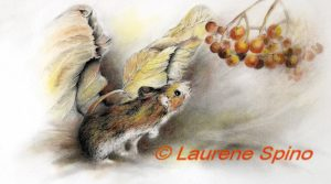 LSpino_Deer Mouse_2