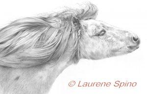 LSpino_Shetland Pony 1