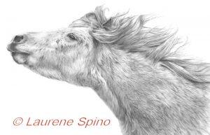 LSpino_Shetland Pony 2