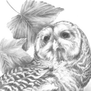 LSpino_barred owl 01