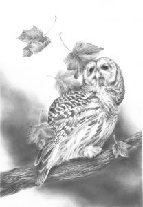 LSpino_barred owl 02