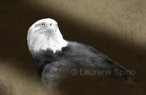 LSpino_digital eagle
