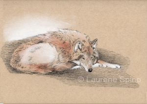 LSpino_wolfl on toned paper.jpg